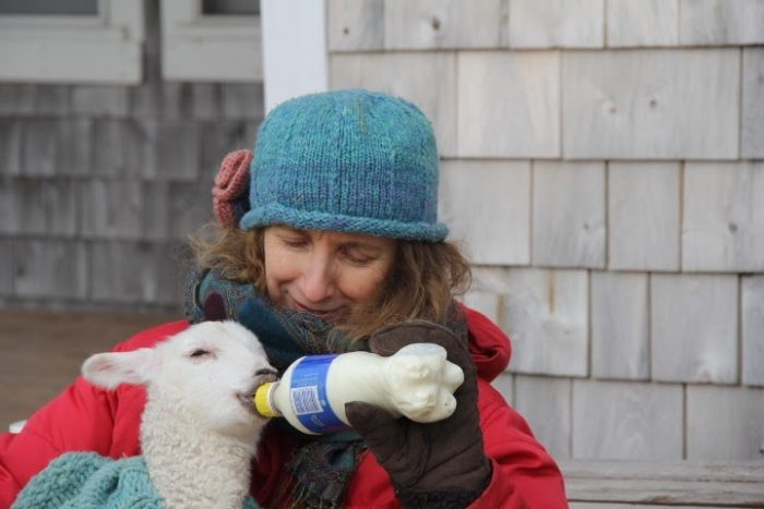 Teresa bottle-feeding a lamb