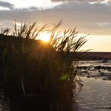 Sun setting through the grasses Rock Barra Retreat