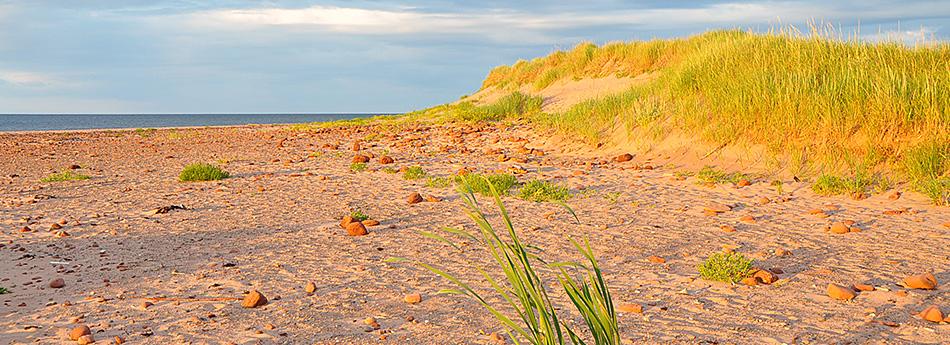 Rock Barra Retreat Beach Dunes and Grasses